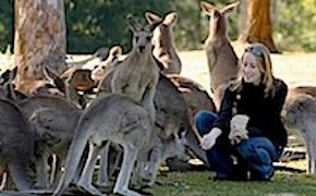 Incentive travel delegats ina koala park with uniq dmc australia