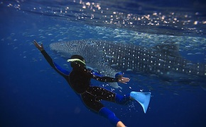 dmc-australia-active-adventure-travel-whale-shark-uniq