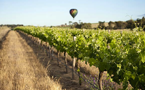 dmc-australia-luxury-travel-wine-melbourne-uniq