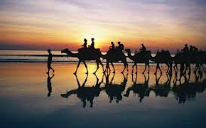 Incentive group Camel Riding on a soft white sand in Broome with dmc Perth and Western Australia