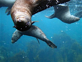 Only 1 hour from Hobart in Tasmania, incentive travel delegates jump aboard the Ocean Prowler and join UNIQ Travel & Incentives Australia, your dmc Hobart and Wild Ocean Tasmania on eco cruise along the edge of Tasman National Park