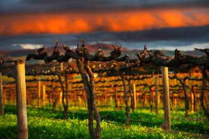 Wine regions of South Australia are world known for some of the best wines in the world. Explore wine regions of South Australia with UNIQ dmc Australia, specialists in luxury travel and incentive travel