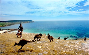 In Australia incentive travel delegates enjoy fauna and luxury on Kangaroo Island with UNIQ Travel  Australia, destination management company Adelaide