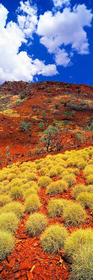 Spinifex-Karijini-National-Park-E2-80-A2-North-Western-Australia