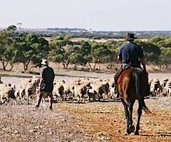 dmc-australia-sydney-incentive-sheep-station-tour-240