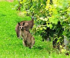 dmc-australia-sydney-incentive-wine-hunter-240