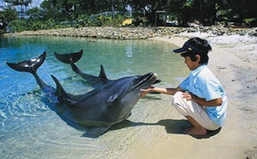 dmc-australia-family-dolphins-uniq-luxury-travel