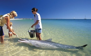 dmc-australia-nature-dolphins-uniq-travel