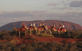 Incentive group on a camel tour with dmc uluru in australia