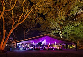 In Australia incentive travel delegates enjoy dining experience in the rainforest with destination management company cairns, UNIQ Travel Australia