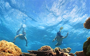 Incentive travel delegates enjoy snorkeling in Great Barrier Reef with UNIQ Travel Australia, destination management company Cairns