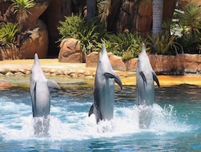 In Australia, on the Gold Coast Incentive Group enjoy breakfast with Dolphins show with dmc Brisbane, UNIQ Travel & Incentives Australia