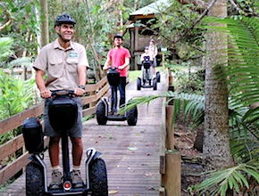 In Australia, on the Gold Coast Incentive Group enjoy segway tour through the national park with dmc Brisbane, UNIQ Travel & Incentives Australia