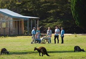 Incentive travel Australia takes delegates to Kangaroo Island to meet the kangaroos. By DMC Adelaide and UNIQ Incentive Travel Australia